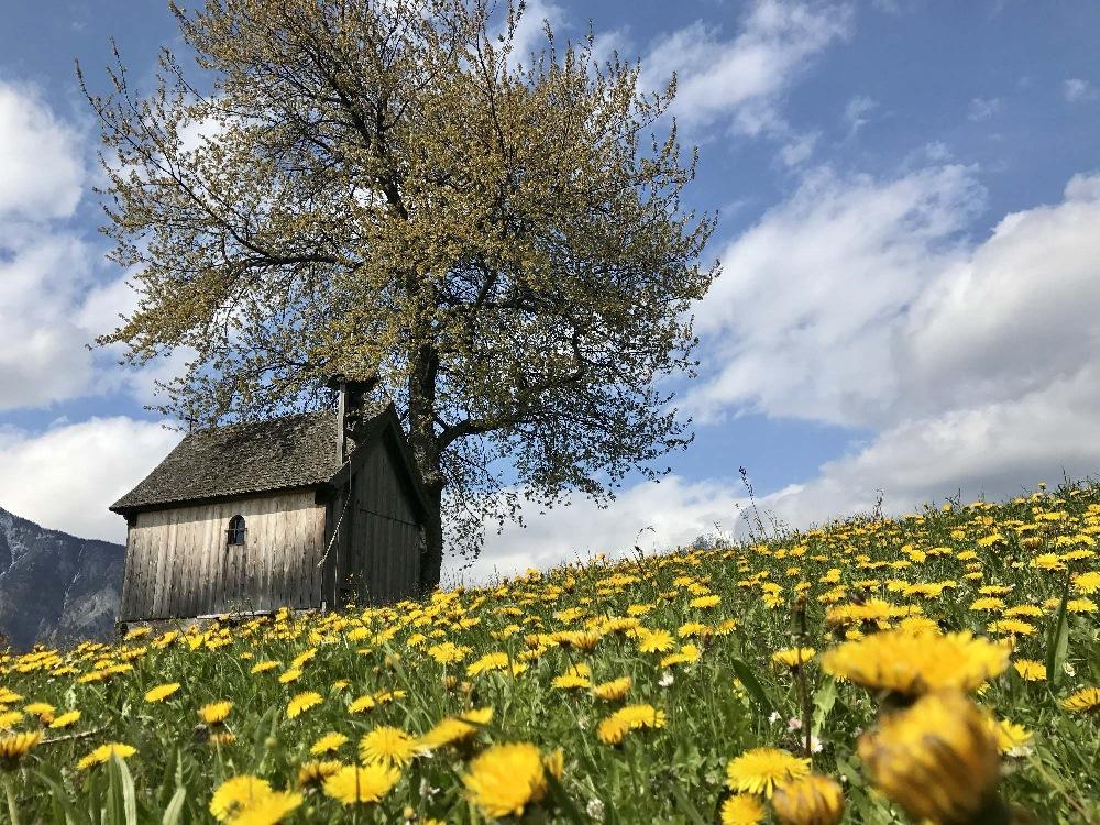 Frühling in Tirol: Blumenwiesen und Skitour liegen nur einen Tag voneinander entfernt