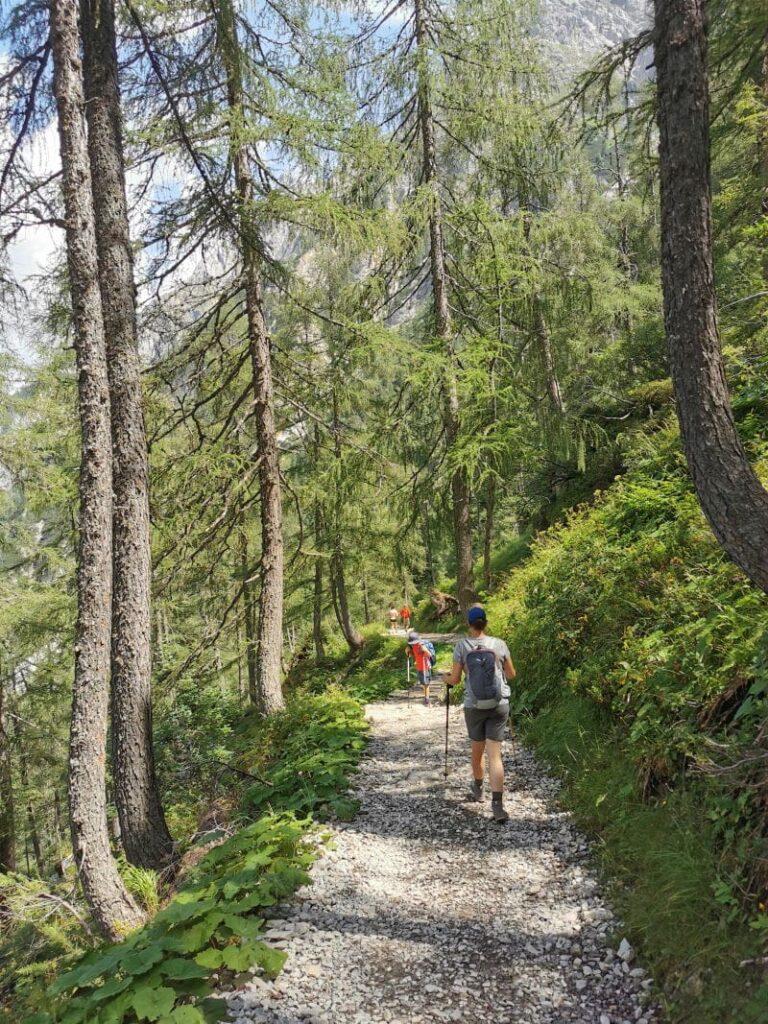 Durch den Bergwald zum Tappenkarsee wandern